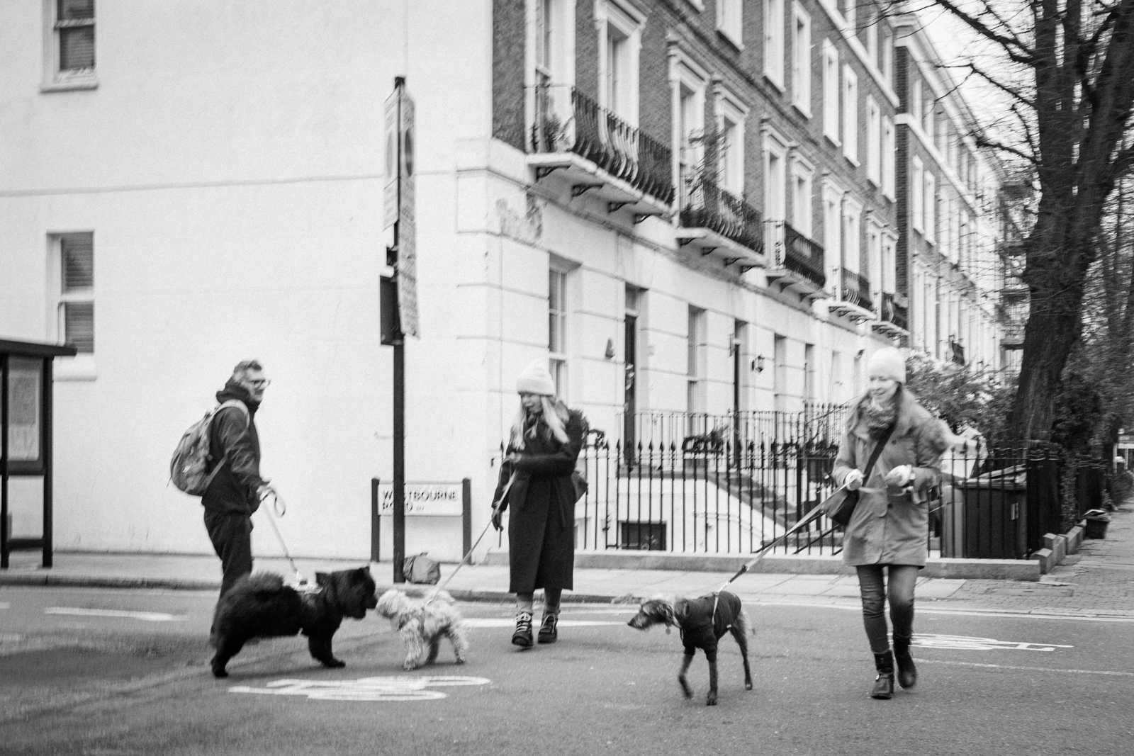 Three people walking their dogs
